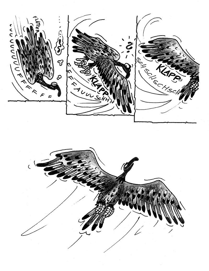 Adler11